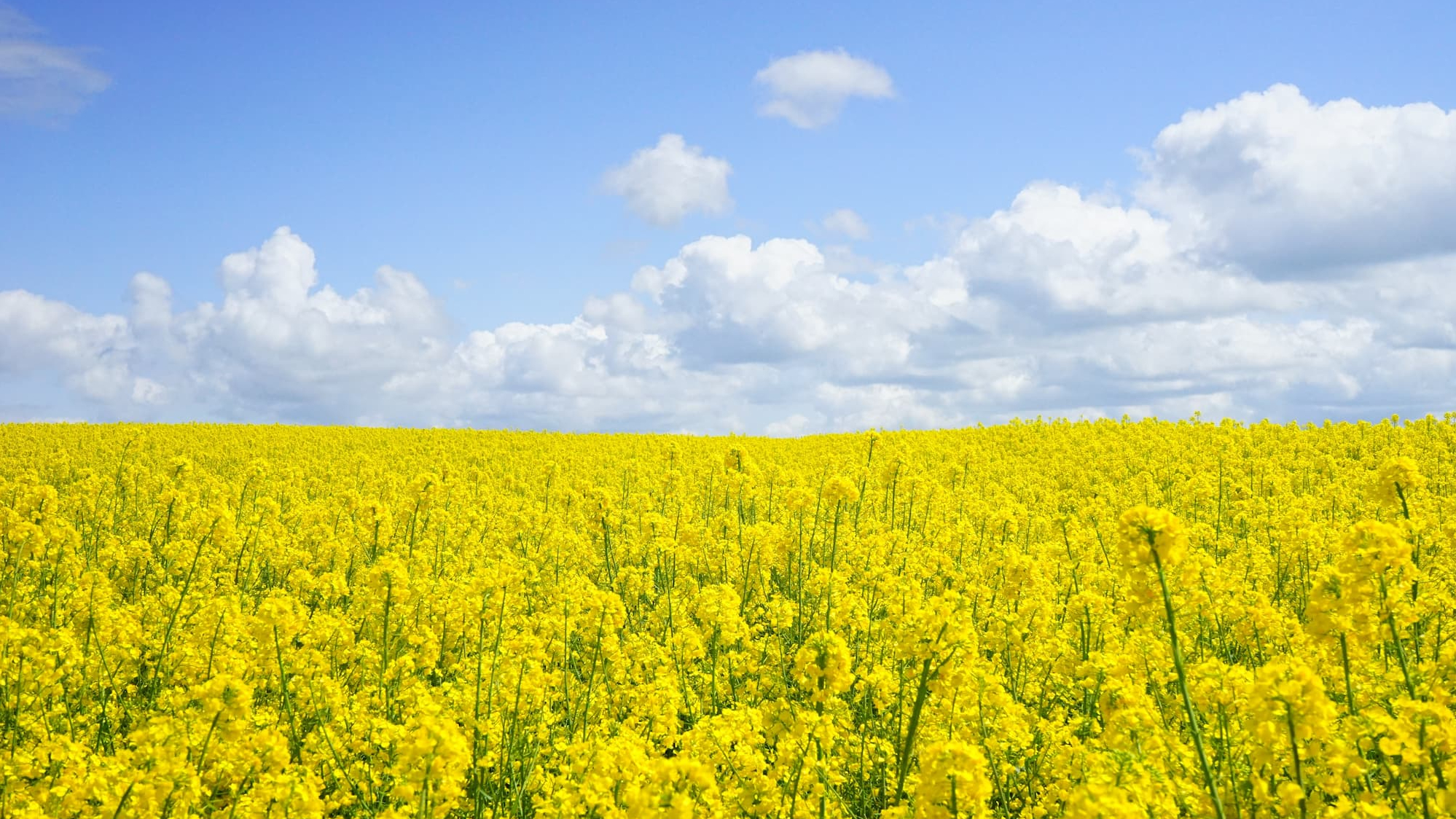 allergies printemps